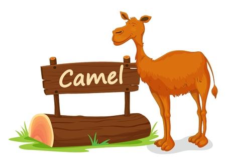 illustratie van kameel en naam bord op een witte