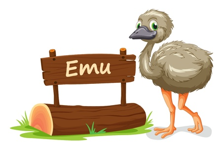 emu bird: illustration of emu and name plate on a white