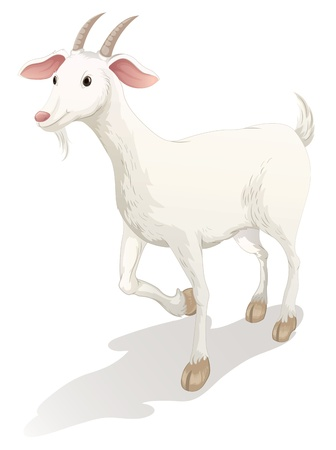 domestic goat: illustration of a goat on a white background