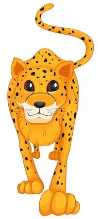 panthera: illustrazione di un leopardo su uno sfondo bianco