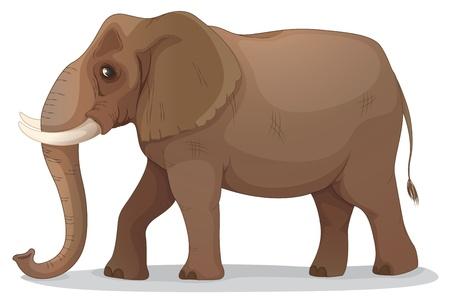 zoogdier: illustratie van een olifant op een witte achtergrond