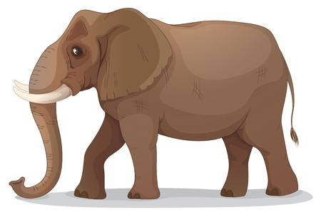 one animal: illustration of an elephant on a white background Illustration