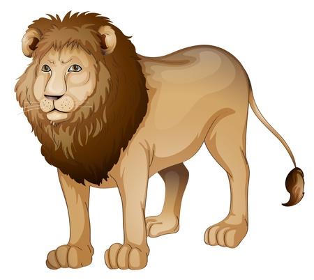 panthera: illustrazione di un leone su uno sfondo bianco