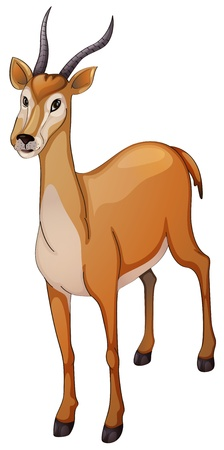 illustration of a antelope a white background Vector
