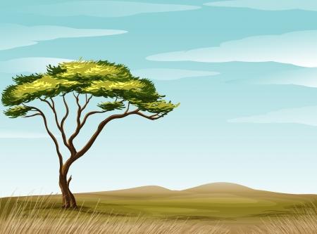 illustration of a savannah landscape  Vector