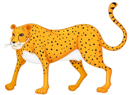 panthera pardus: illustration of a leopard on a white background