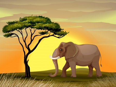 grasslands: illustration of a Elephant standing under a tree Illustration