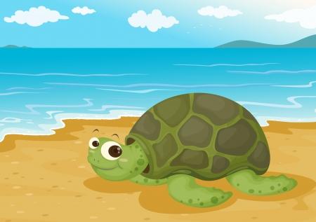 illustration of a tortoise on sea shore Vector