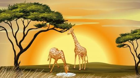ilustración de dos jirafas en la selva