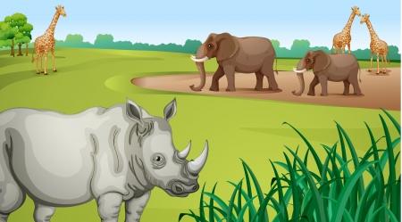illustration zoo: illustrazione di vari animali in una natura bellissima Vettoriali
