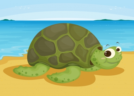 sea bird: illustration of a tortoise on sea shore Illustration