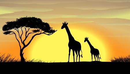 praterie: illustrazione di giraffa in una natura bellissima Vettoriali