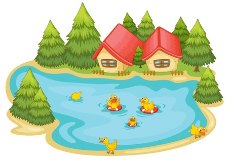 lake house: illustration of ducklings in a pond in nature
