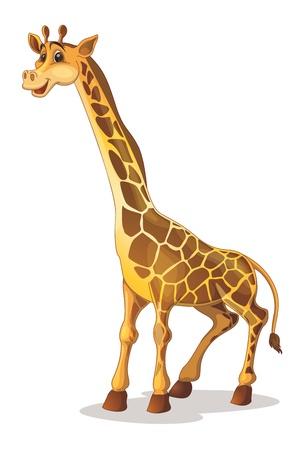 jirafa fondo blanco: Ilustraci�n de una jirafa linda