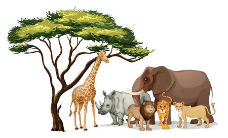 large group of animals: Illustration of a group of african animals