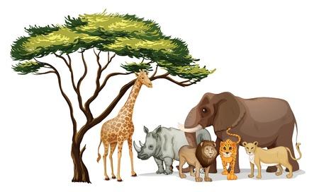 Illustrazione di un gruppo di animali africani Vettoriali