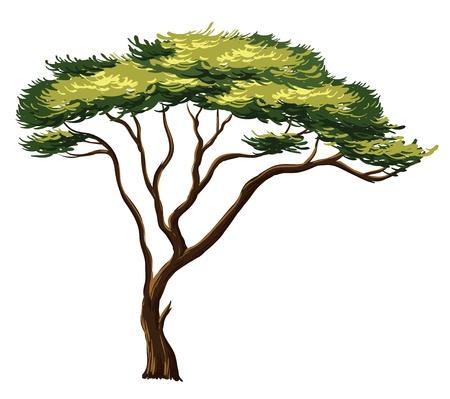 Illustratie van een Afrikaanse boom