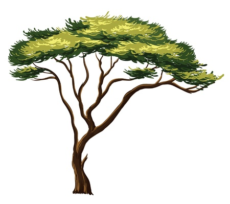 tree canopy: Illustration of an african tree