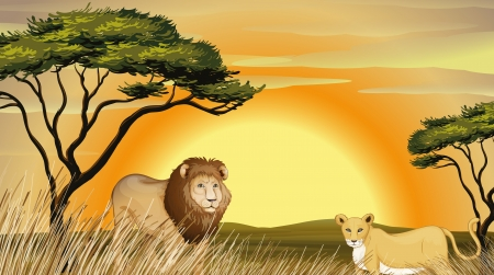 yellow african: illustration of a tiger and lion in jungle