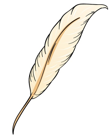 animal body part: illustration of a feather in white background