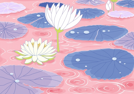 illustration of a pond with white lotus flowers Vector