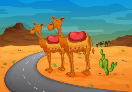 cactus desert: illustration of camel in a desert Illustration