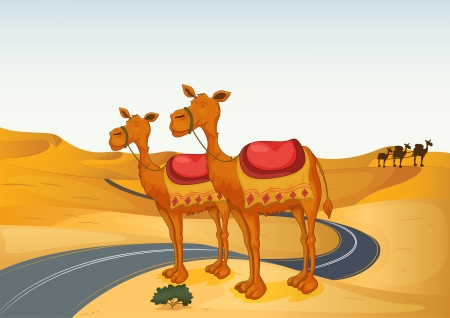 camels: illustration of camels in a desert and road