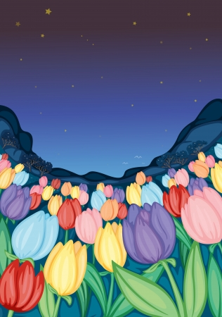 detailed illustration of colorful tulip flower farm Vector
