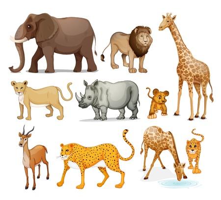 dieren: illustratie van Dieren in op een witte achtergrond