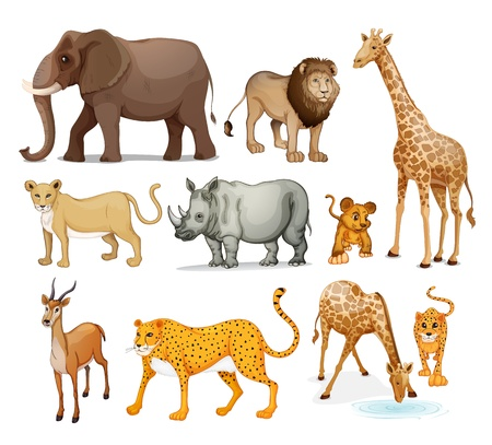 illustration of Animals in on a white background Vector