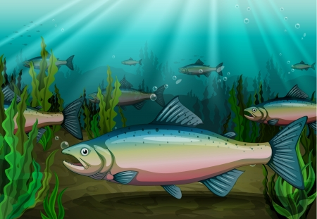 group of fish: illustration of a fish under sea water Illustration