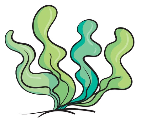 illustration of an under water plant on a white background Vector