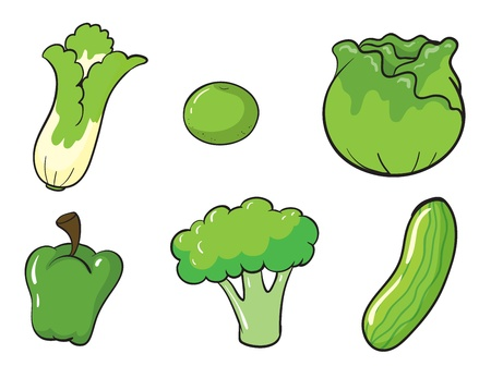 illustration of green vegetables on white background Vector