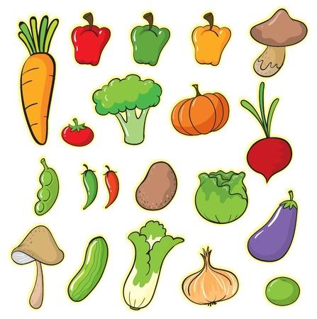 brinjal: illustration of vegetables on a white background Illustration
