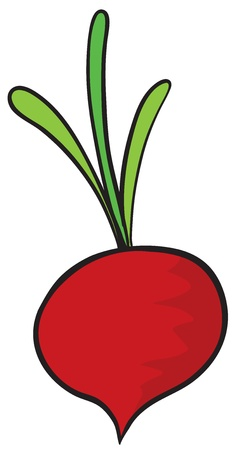 illustration of a beetroot on a white background Illustration