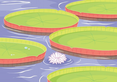 illustration of a beautiful lotus flower in a pond Stock Vector - 15869578
