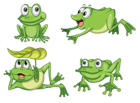 detailed illustration of green frog on white background Vector