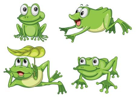 caricaturas de ranas: ilustraci�n detallada de la rana verde sobre fondo blanco