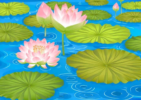 detailed illustration of a lotus flowers in pond Vector