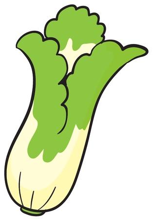 illustration of cauliflower on a white background