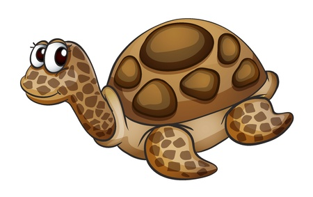 freshwater turtle: detailed illustration of a tortoise on a white background Illustration