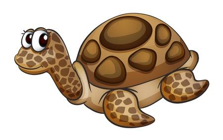 freshwater: detailed illustration of a tortoise on a white background Illustration