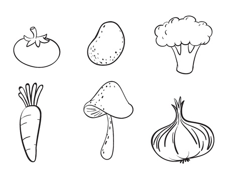 detailed illustration on various vegetables on a white background Vector