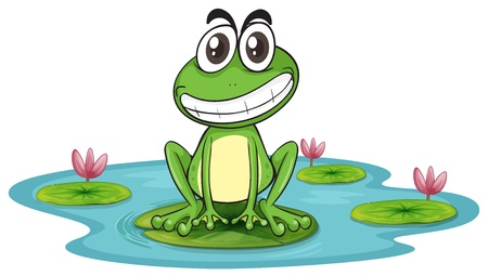 lily pad: illustration of a frog and a water on a white background