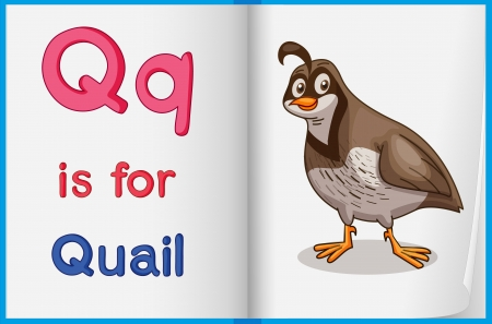 quail: Illustrated voabulary learning sheet in a book