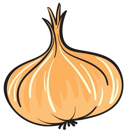 cebolla blanca: Ilustraci�n de la cebolla en un fondo blanco
