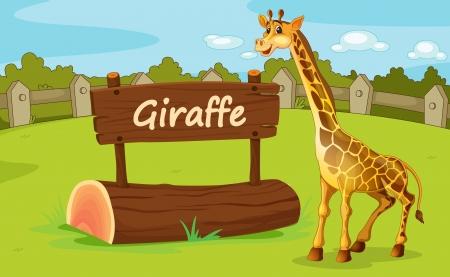 jirafa caricatura: Ilustraci�n del recinto de animales en el zool�gico Vectores