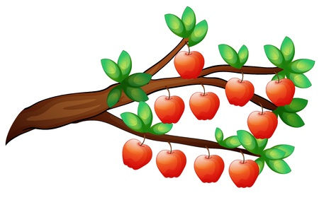 10: illustration of apples on a white background