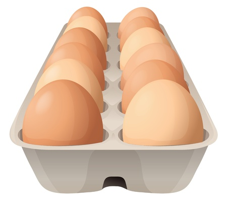 egg carton: illustration of eggs on a white background