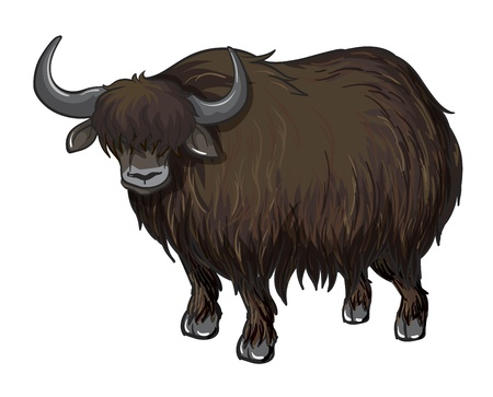 buffalo horn: illustration of a buffalo on a white background